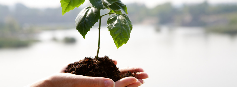 Close-up of fresh branch with leaves in soil held by a human